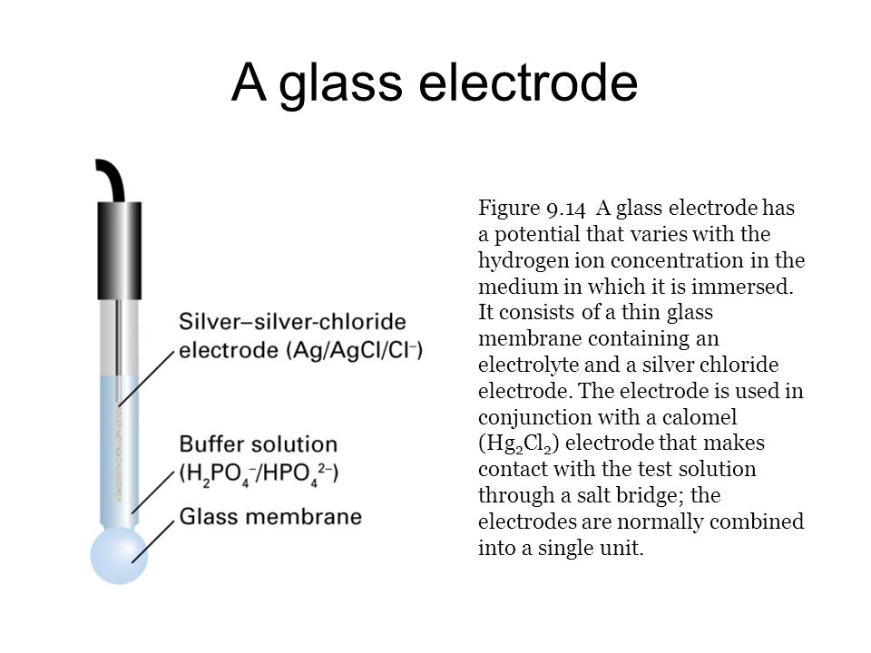 A glass electrode Figure 9.14 A glass electrode has a potential that varies with the hydrogen ion concentration in the medium in which it is immersed.
