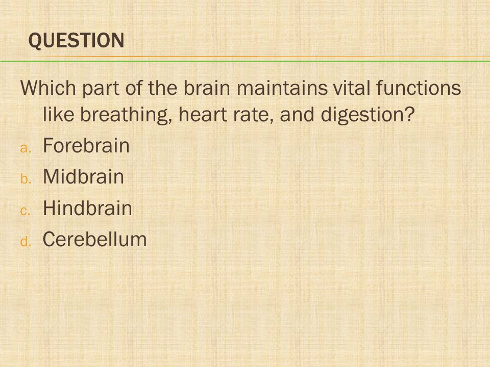 QUESTION Which part of the brain maintains vital functions like breathing, heart rate, and digestion? a. Forebrain b. Midbrain c. Hindbrain d. Cerebel