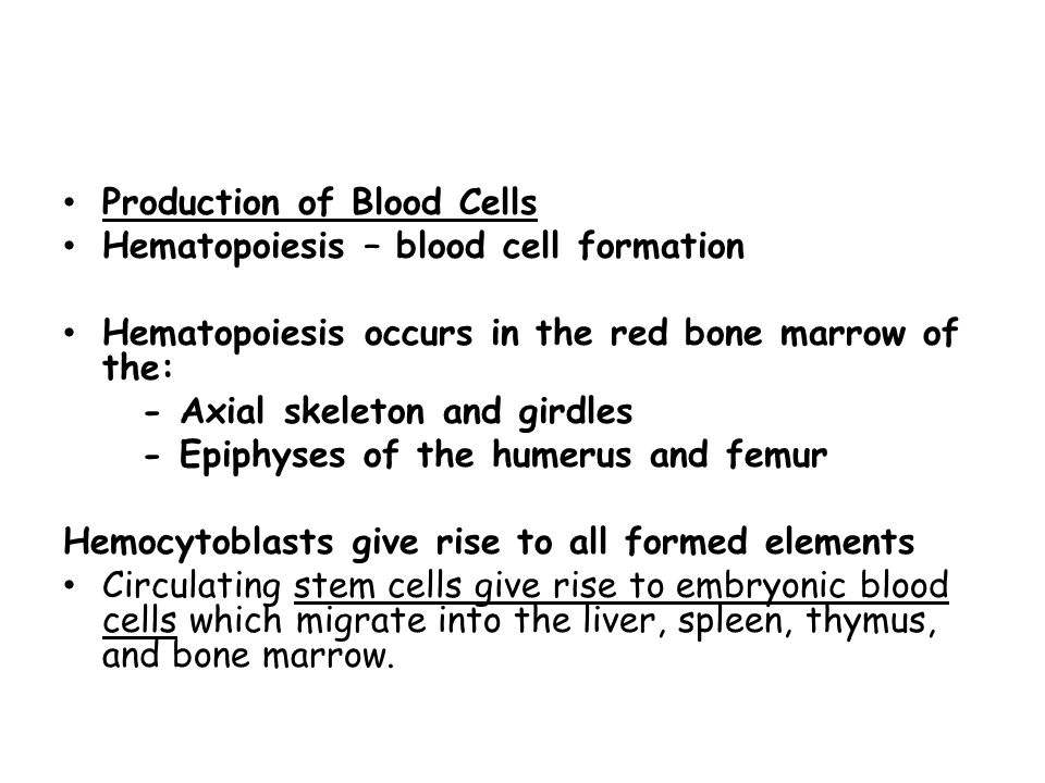 Production of Blood Cells Hematopoiesis – blood cell formation Hematopoiesis occurs in the red bone marrow of the: - Axial skeleton and girdles - Epip