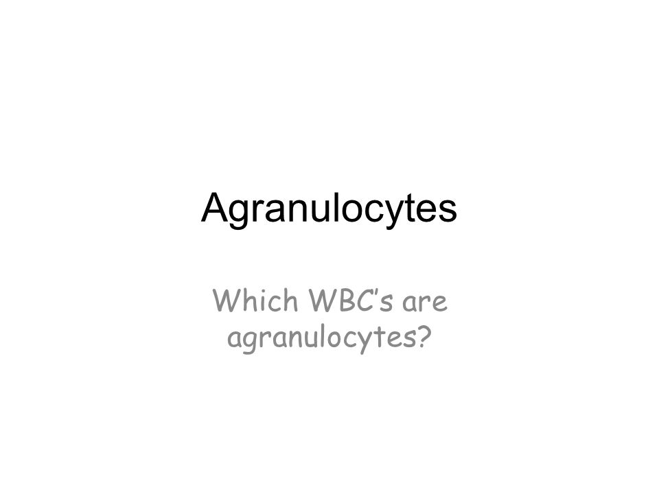 Agranulocytes Which WBC's are agranulocytes?