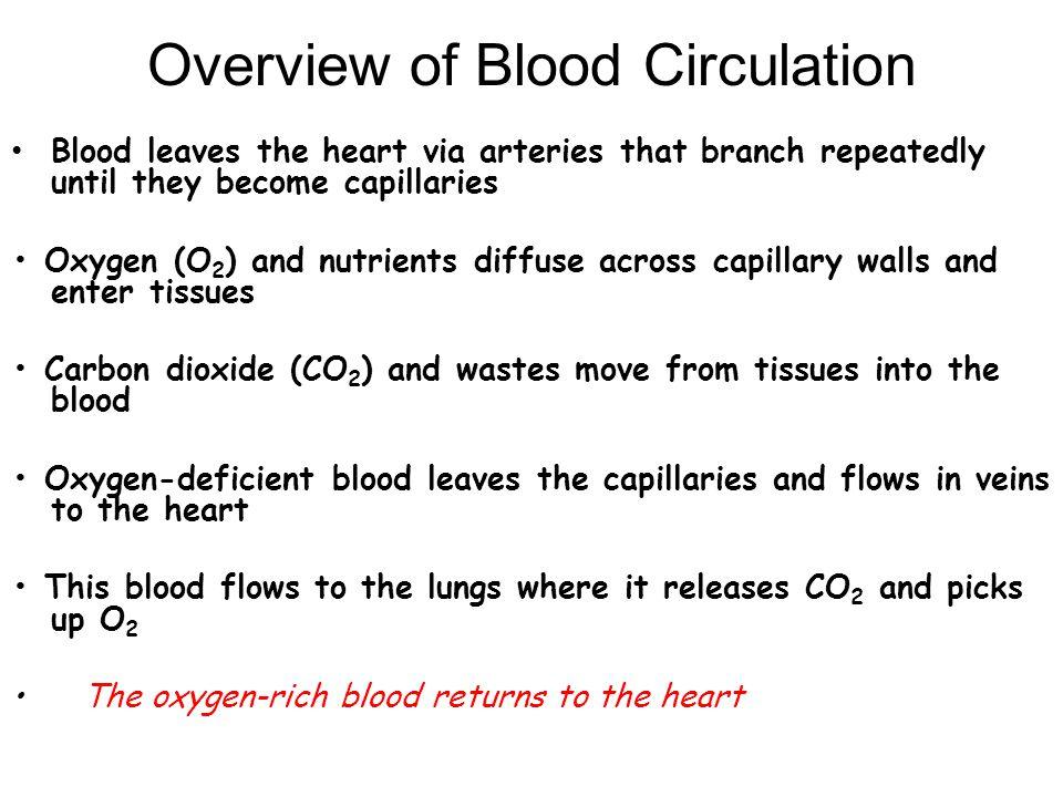 Granulocytes Which WBC's are granulocytes?
