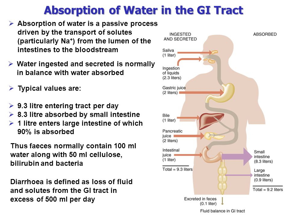 Absorption of Water in the GI Tract  Absorption of water is a passive process driven by the transport of solutes (particularly Na + ) from the lumen of the intestines to the bloodstream  Water ingested and secreted is normally in balance with water absorbed  Typical values are:  9.3 litre entering tract per day  8.3 litre absorbed by small intestine  1 litre enters large intestine of which 90% is absorbed Thus faeces normally contain 100 ml water along with 50 ml cellulose, bilirubin and bacteria Diarrhoea is defined as loss of fluid and solutes from the GI tract in excess of 500 ml per day