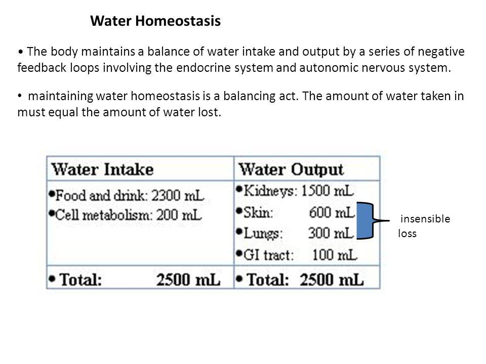 The Na + /K + -ATPase Drives Na + Reabsorption All Along The Renal Tubule LumenBlood ATP ADP 3Na + 2K + Na + diuretics