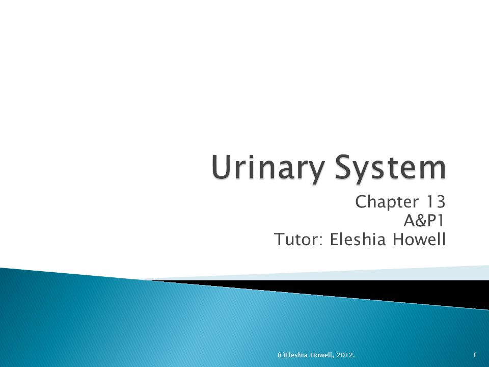  The urinary system is the main excretory system, removing the majority of physiological wastes.