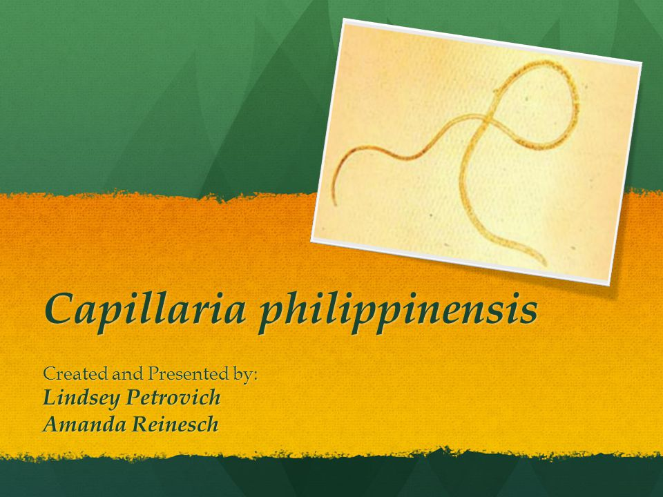 Capillaria philippinensis Created and Presented by: Lindsey Petrovich Amanda Reinesch