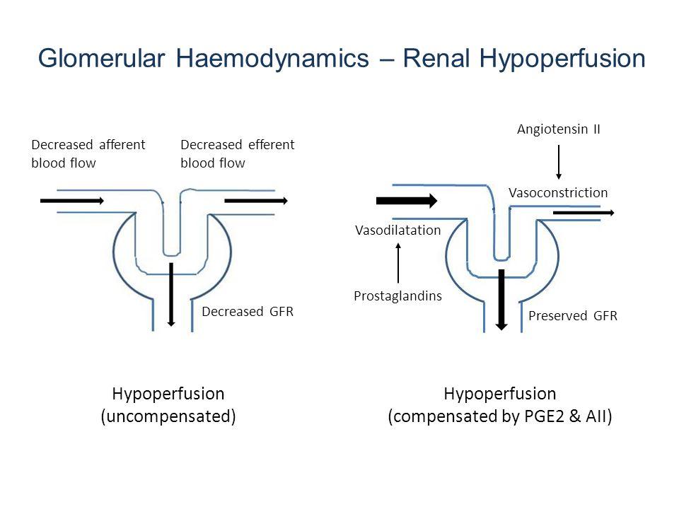 Glomerular Haemodynamics – Renal Hypoperfusion Hypoperfusion (uncompensated) Decreased afferent blood flow Decreased efferent blood flow Decreased GFR Hypoperfusion (compensated by PGE2 & AII) Preserved GFR Vasodilatation Prostaglandins Vasoconstriction Angiotensin II