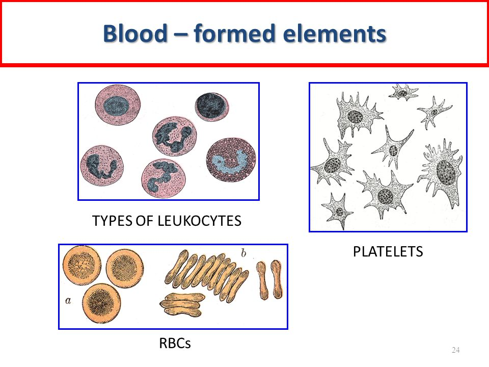 TYPES OF LEUKOCYTES RBCs PLATELETS Blood – formed elements 24