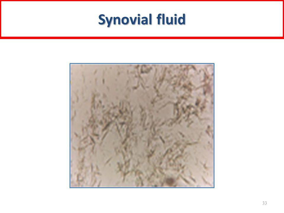 Synovial fluid 33
