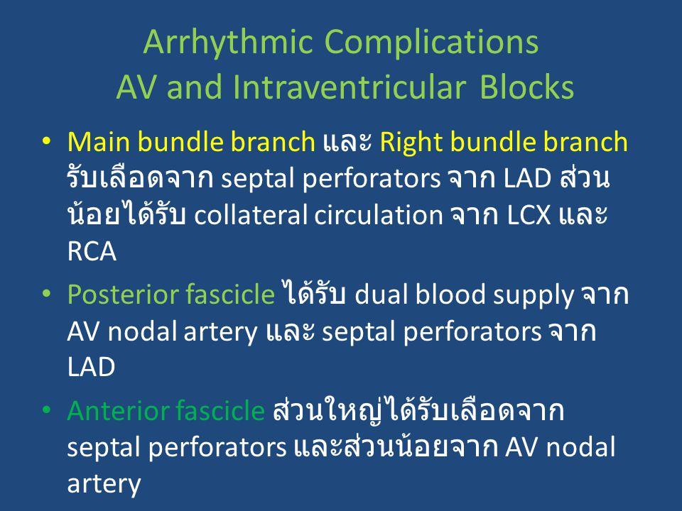 Main bundle branch และ Right bundle branch รับเลือดจาก septal perforators จาก LAD ส่วน น้อยได้รับ collateral circulation จาก LCX และ RCA Posterior fas