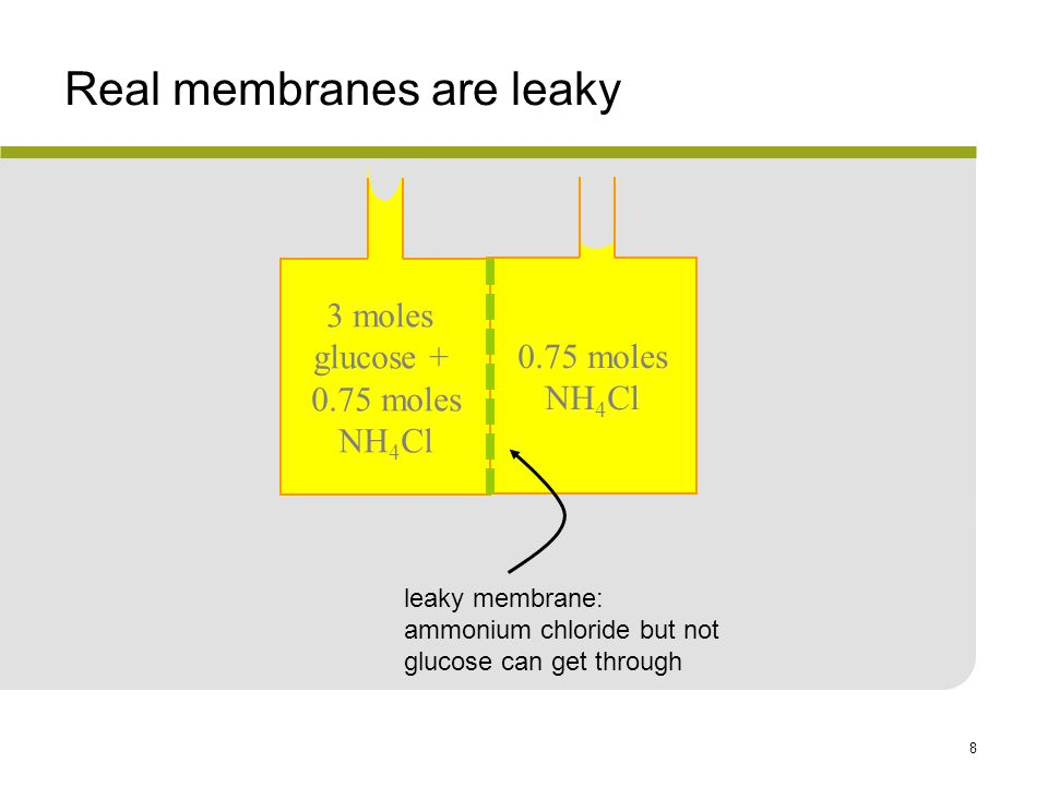 8 Real membranes are leaky 0.75 moles NH 4 Cl 3 moles glucose + 0.75 moles NH 4 Cl leaky membrane: ammonium chloride but not glucose can get through