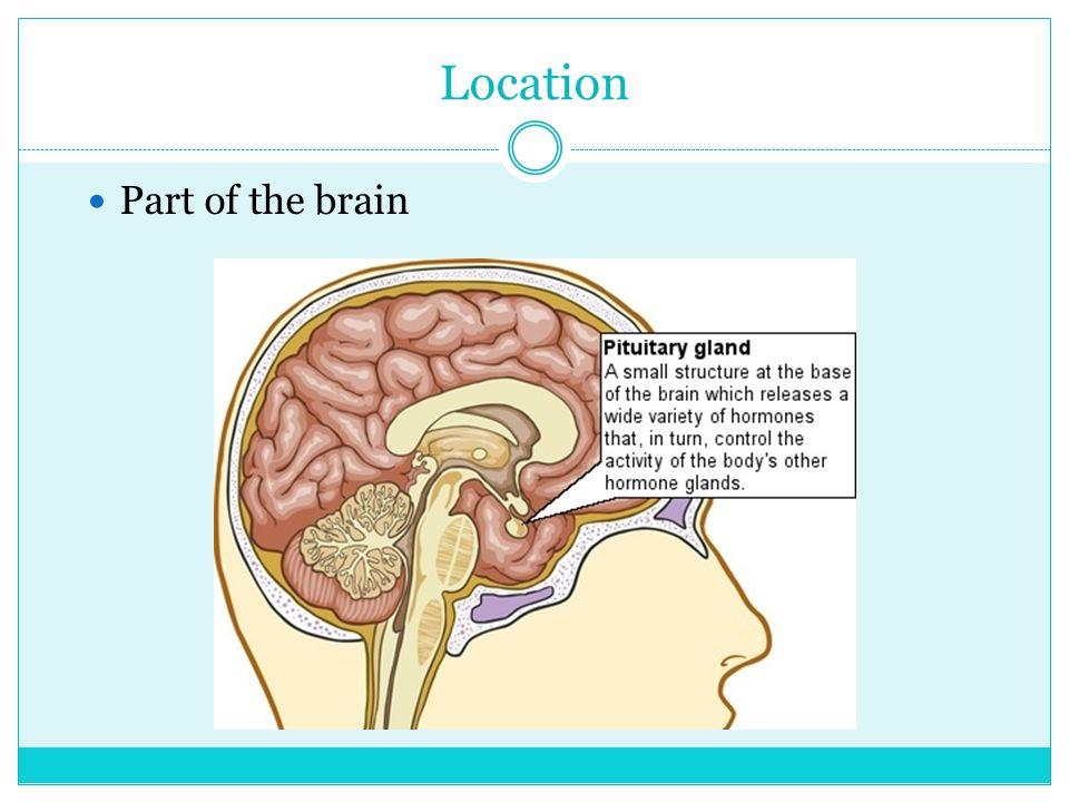 BY: ELENA SEIFERT & KRISTEN THORNE PERIOD 8 1/8/14 Pituitary Gland Posterior Lobe