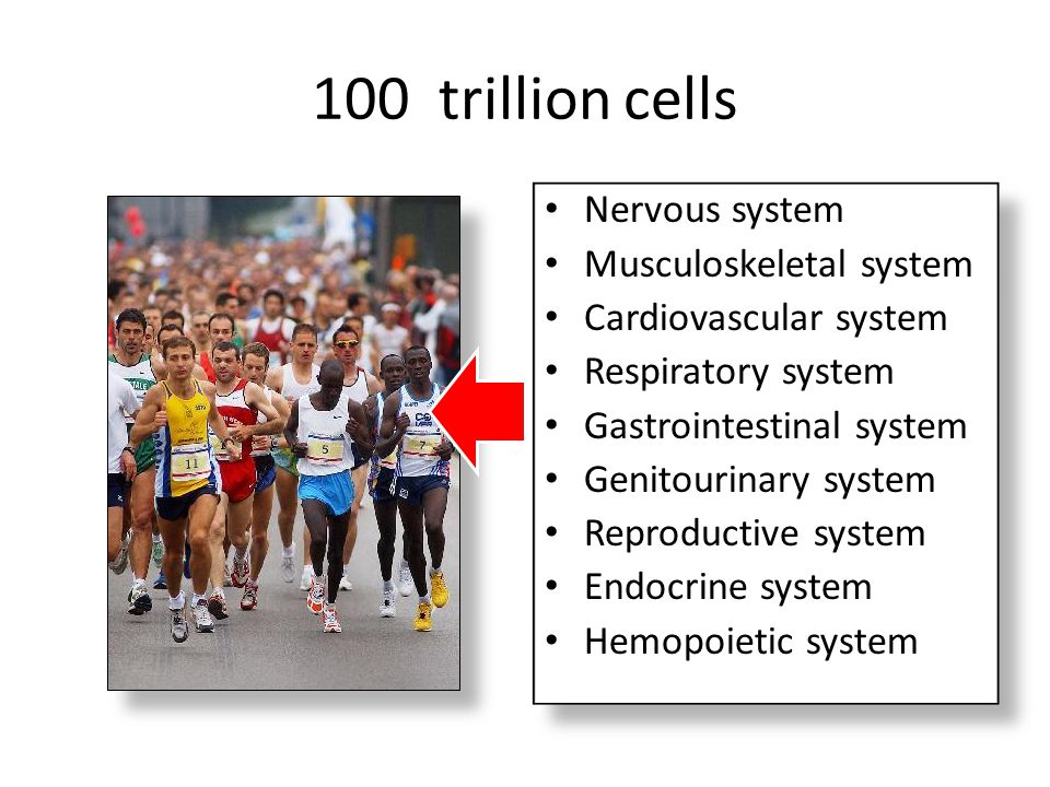 100 trillion cells Nervous system Musculoskeletal system Cardiovascular system Respiratory system Gastrointestinal system Genitourinary system Reprodu