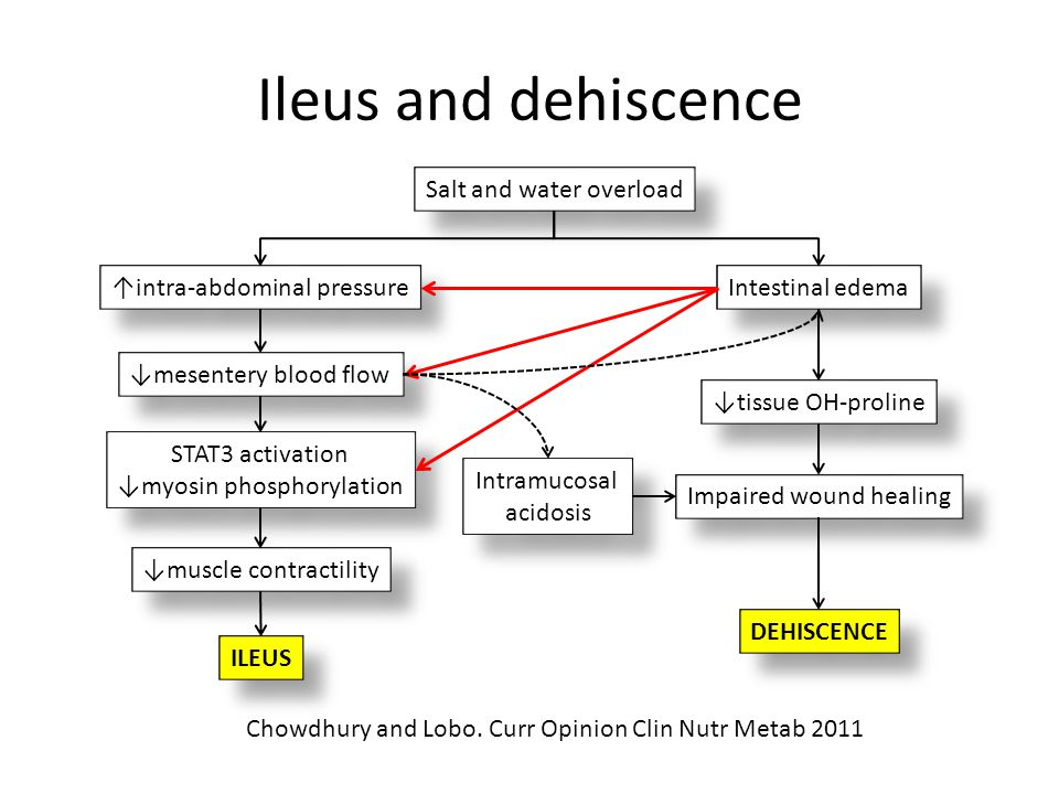 Ileus and dehiscence Salt and water overload ↑intra-abdominal pressure ↓mesentery blood flow Intestinal edema ↓tissue OH-proline STAT3 activation ↓myo