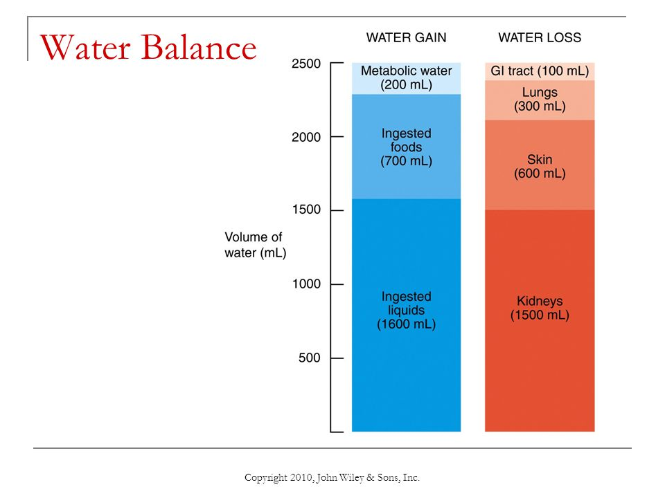 Copyright 2010, John Wiley & Sons, Inc. Water Balance