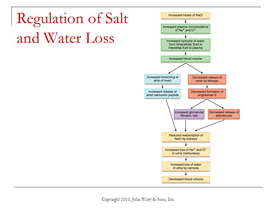 Copyright 2010, John Wiley & Sons, Inc. Regulation of Salt and Water Loss