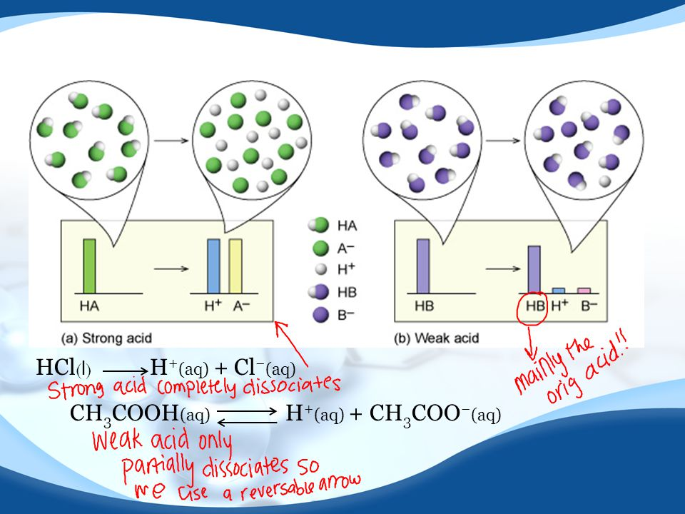 HCl ( l ) H + (aq) + Cl − (aq) CH 3 COOH (aq) H + (aq) + CH 3 COO − (aq)