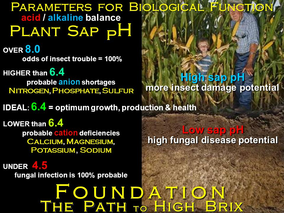 The Path to High Brix Foundation Parameters for Biological Function Plant Sap p H acid / alkaline balance HIGHER than 6.4 probable anion shortages Nitrogen, Phosphate, Sulfur IDEAL : 6.4 = optimum growth, production & health LOWER than 6.4 probable cation deficiencies Calcium, Magnesium, Potassium, Sodium OVER 8.0 odds of insect trouble = 100% Low sap pH high fungal disease potential UNDER 4.5 fungal infection is 100% probable High sap pH more insect damage potential