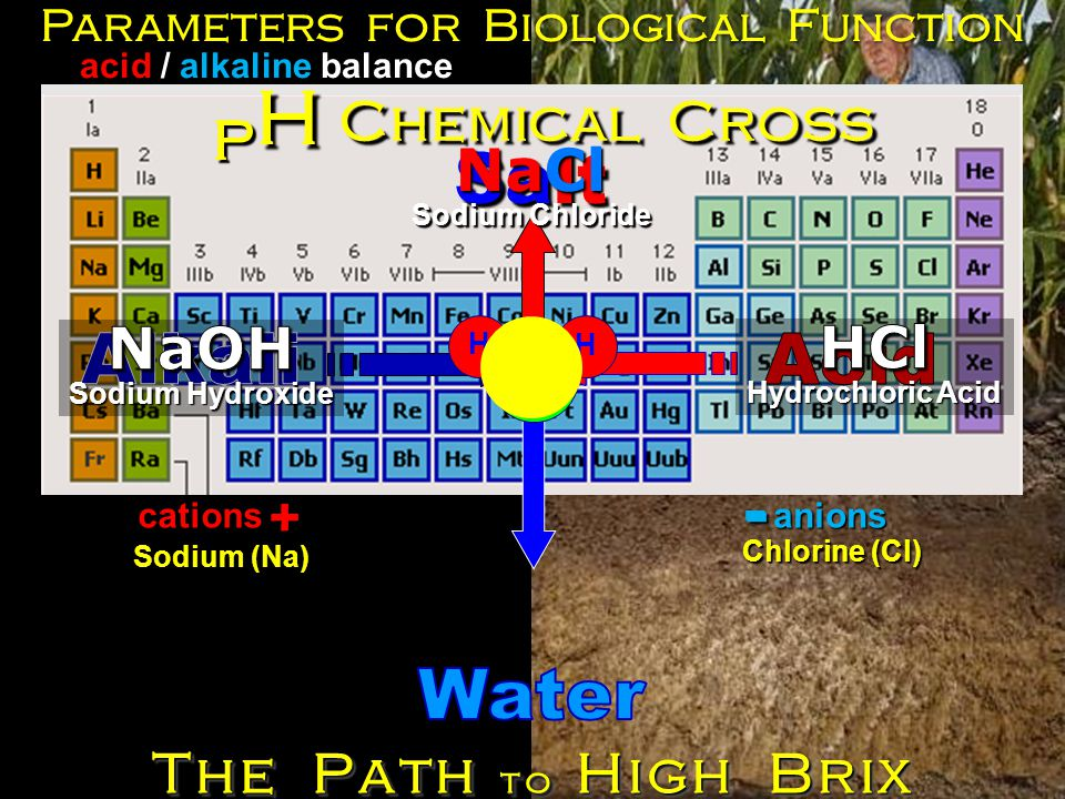Salt Sodium (Na) H H O Chlorine (Cl) Parameters for Biological Function Chemical Cross - acid / alkaline balance pHpHpHpH + The Path to High Brix NaCl