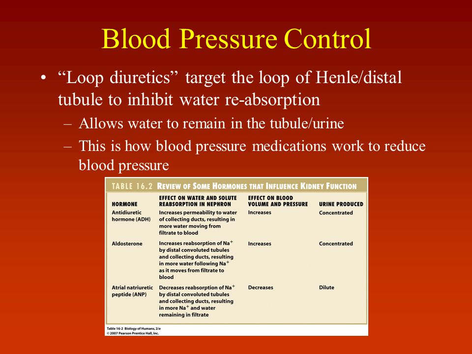 "Blood Pressure Control ""Loop diuretics"" target the loop of Henle/distal tubule to inhibit water re-absorption –Allows water to remain in the tubule/ur"