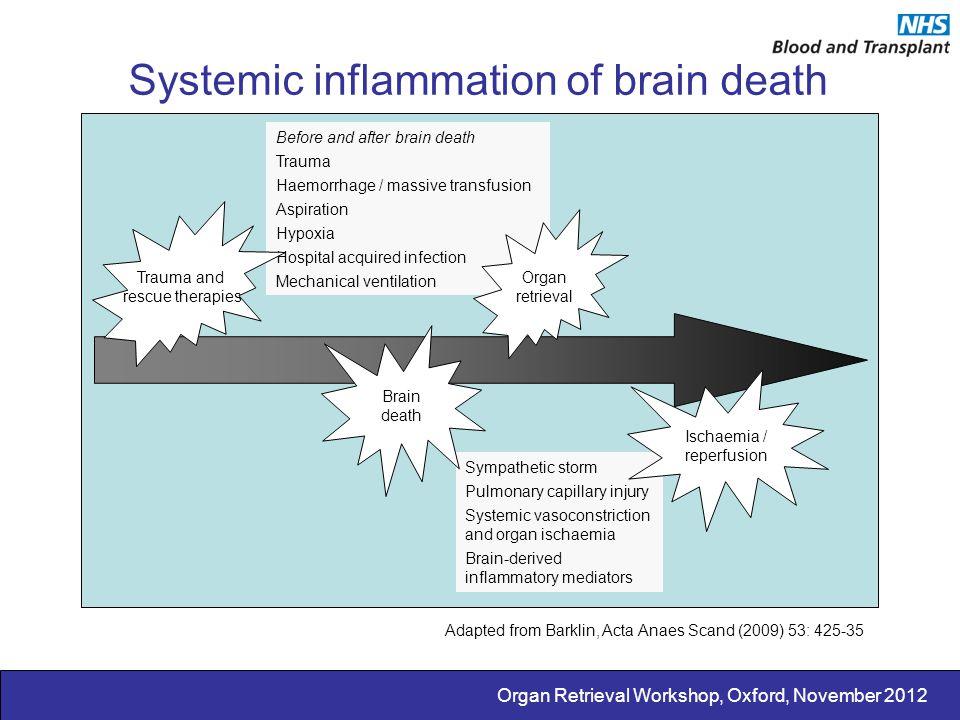 Organ Retrieval Workshop, Oxford, November 2012 Systemic inflammation of brain death Before and after brain death Trauma Haemorrhage / massive transfu