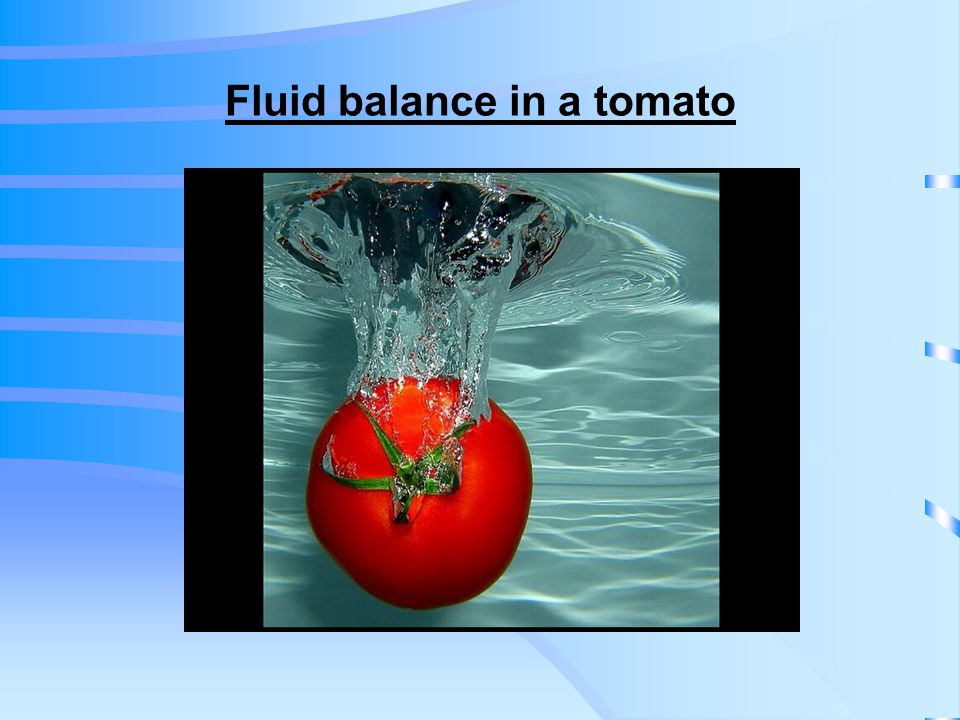 Fluid balance in a tomato