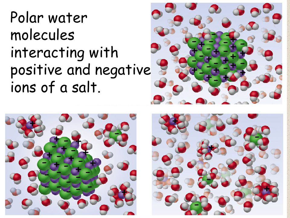 Polar water molecules interacting with positive and negative ions of a salt.