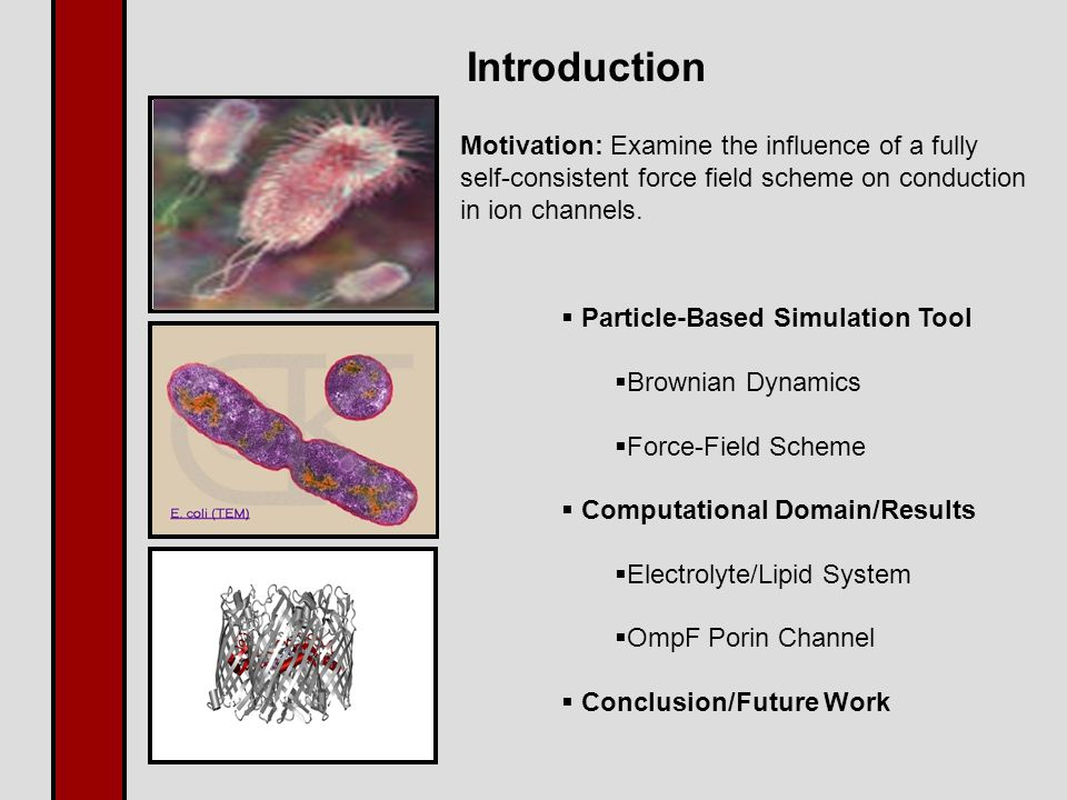 Introduction  Particle-Based Simulation Tool  Brownian Dynamics  Force-Field Scheme  Computational Domain/Results  Electrolyte/Lipid System  OmpF Porin Channel  Conclusion/Future Work Motivation: Examine the influence of a fully self-consistent force field scheme on conduction in ion channels.