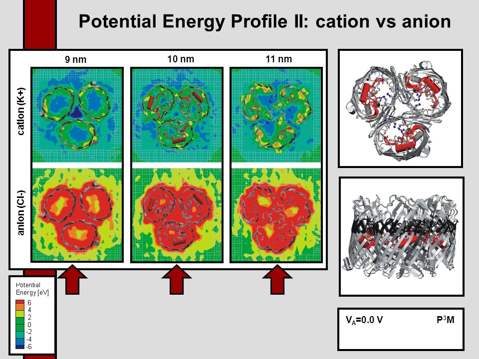 Potential Energy Profile II: cation vs anion anion (Cl-) cation (K+) 9 nm 10 nm 11 nm V A =0.0 VP3MP3M