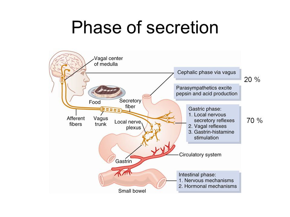 Phase of secretion 20 % 70 %