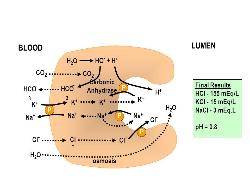 K+K+ K+K+ K+K+ K+K+ Na + H+H+ Cl - H2OH2O H2OH2O osmosis H2OH2O HO - + H + HCO 3 CO 2 Carbonic Anhydrase Final Results HCl - 155 mEq/L KCl - 15 mEq/L NaCl - 3 mEq.L pH = 0.8 P P BLOOD LUMEN P P
