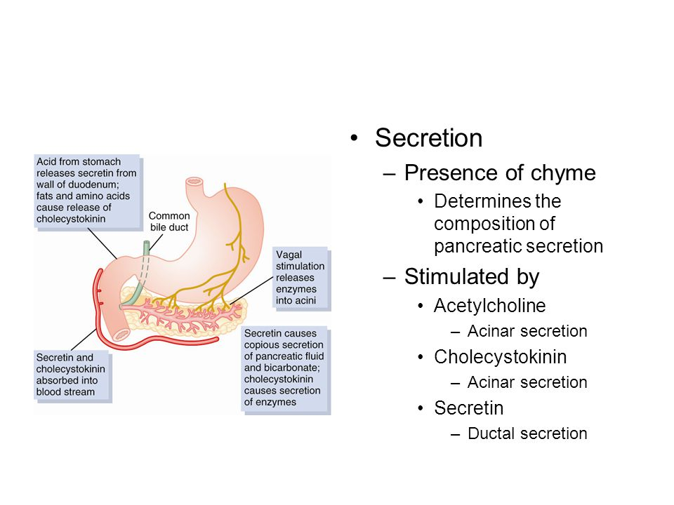 Secretion –Presence of chyme Determines the composition of pancreatic secretion –Stimulated by Acetylcholine –Acinar secretion Cholecystokinin –Acinar secretion Secretin –Ductal secretion
