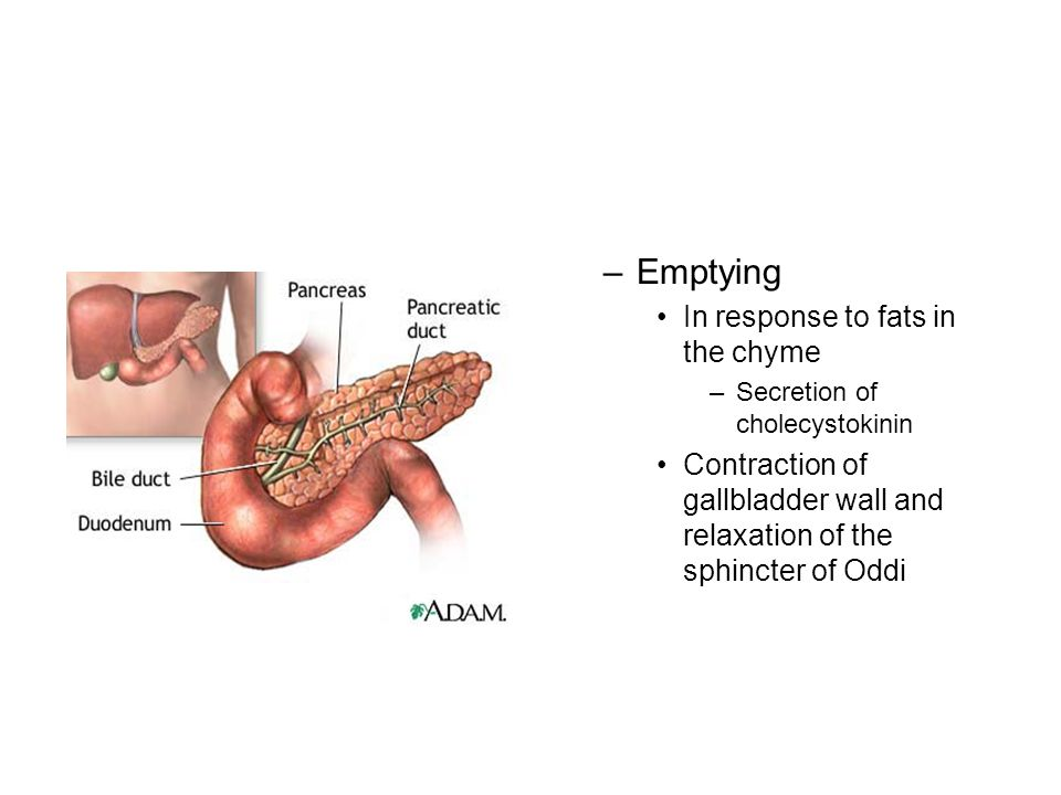 –Emptying In response to fats in the chyme –Secretion of cholecystokinin Contraction of gallbladder wall and relaxation of the sphincter of Oddi