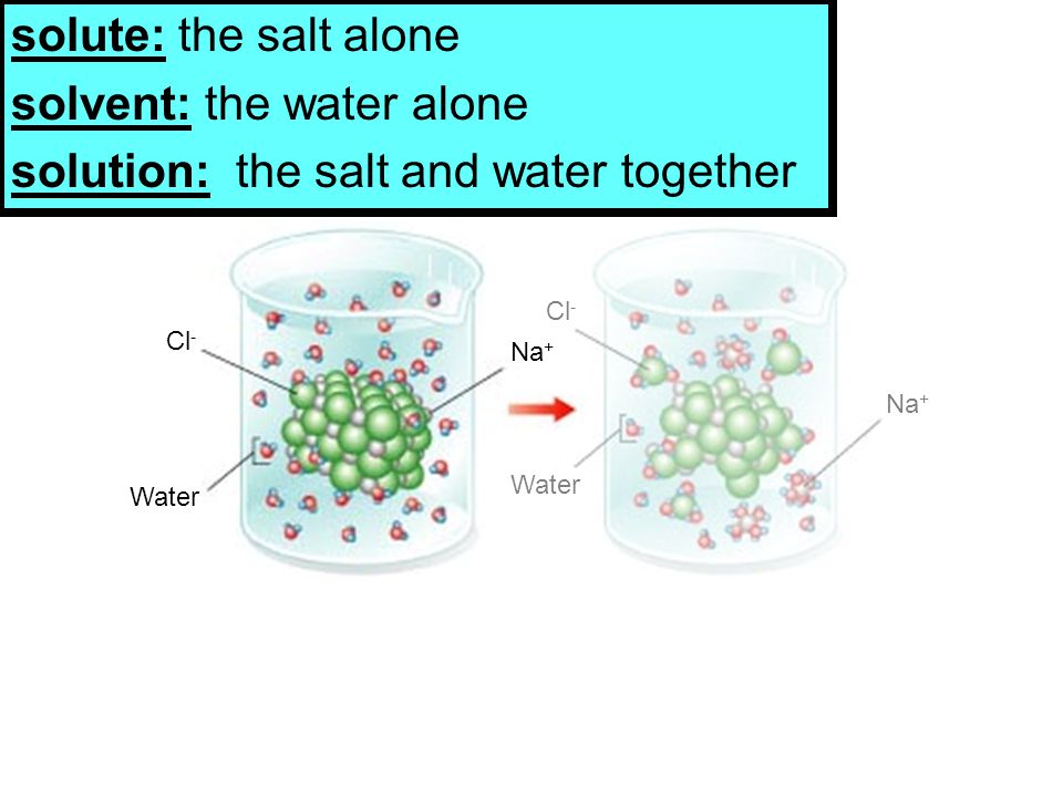 Cl - Water Cl - Na + Water Na + solute: the salt alone solvent: the water alone solution: the salt and water together