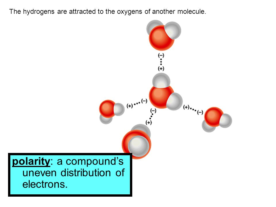 The hydrogens are attracted to the oxygens of another molecule. polarity: a compound's uneven distribution of electrons.
