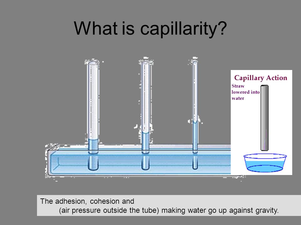 What is capillarity? The adhesion, cohesion and (air pressure outside the tube) making water go up against gravity.