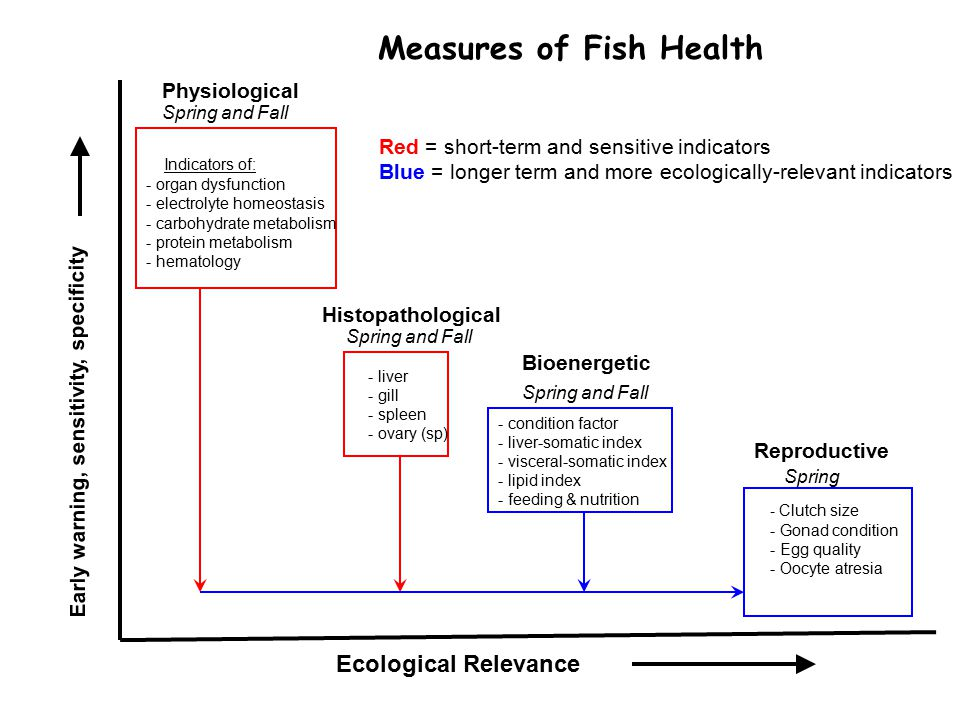 Bluegill-fall 2009 Bluegill-fall 2010 Integrated health responses