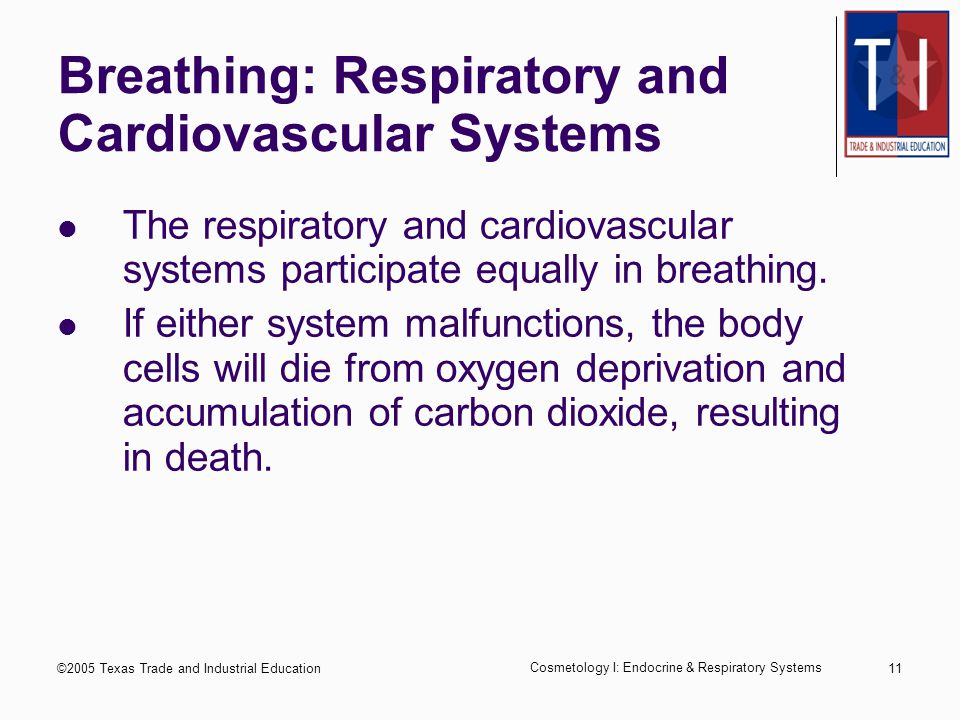 ©2005 Texas Trade and Industrial Education Cosmetology I: Endocrine & Respiratory Systems 10 Basic Function of the Respiratory System To enable breathing