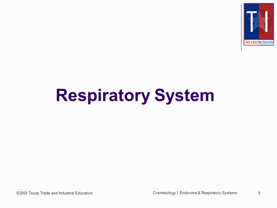 ©2005 Texas Trade and Industrial Education Cosmetology I: Endocrine & Respiratory Systems 9 Respiratory System