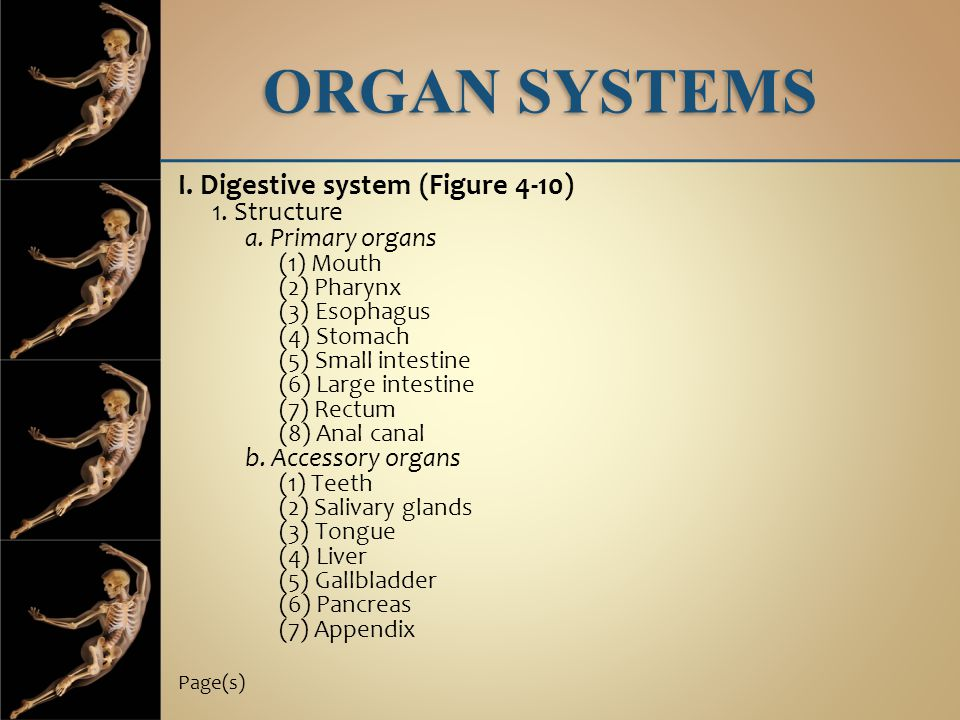 ORGAN SYSTEMS I. Digestive system (Figure 4-10) 1. Structure a. Primary organs (1) Mouth (2) Pharynx (3) Esophagus (4) Stomach (5) Small intestine (6)