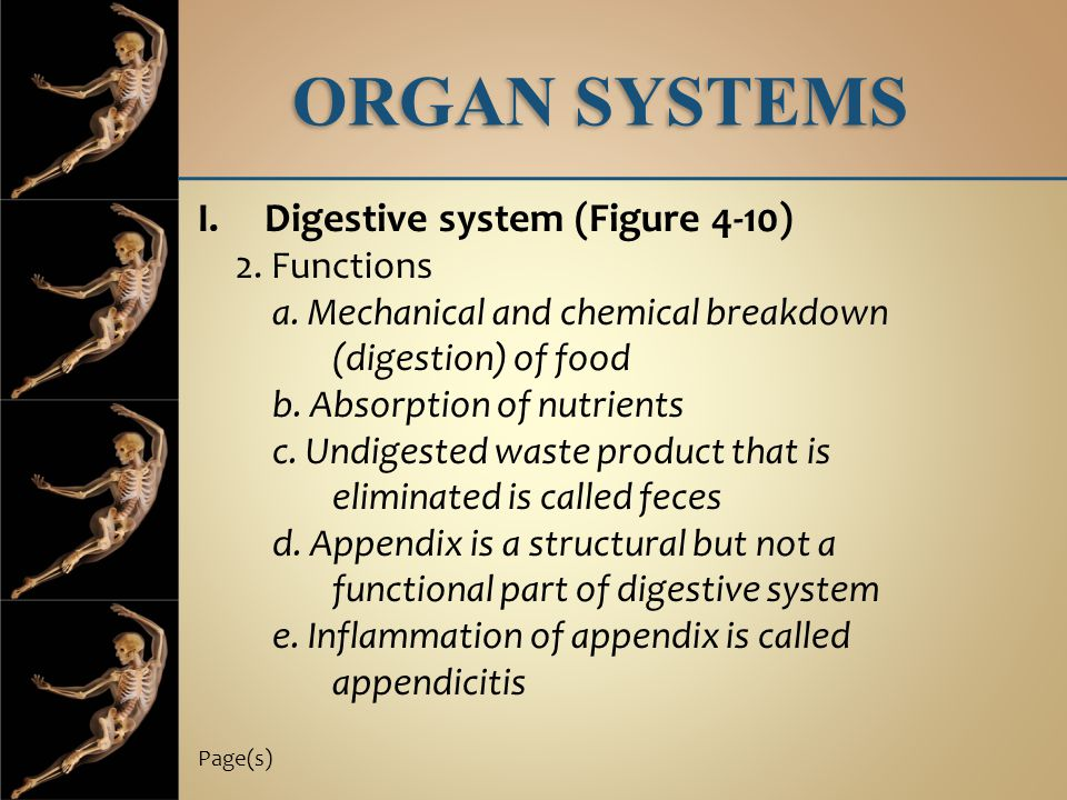 ORGAN SYSTEMS I.Digestive system (Figure 4-10) 2. Functions a. Mechanical and chemical breakdown (digestion) of food b. Absorption of nutrients c. Und