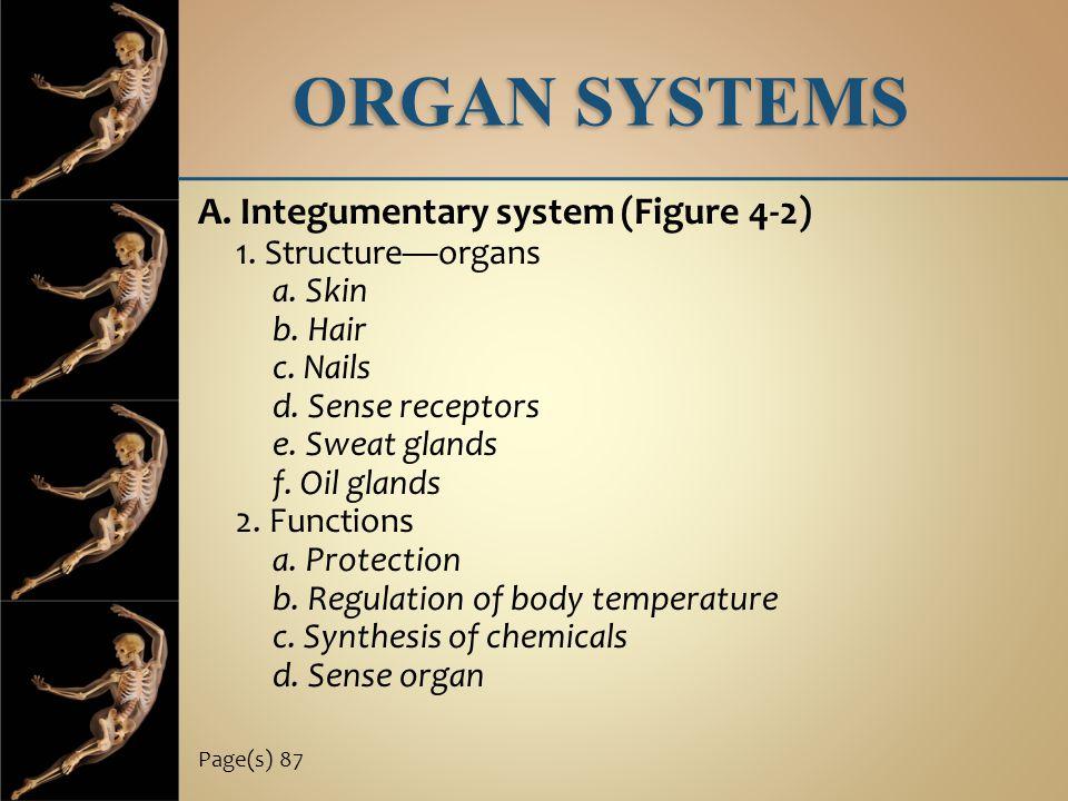ORGAN SYSTEMS A. Integumentary system (Figure 4-2) 1. Structure—organs a. Skin b. Hair c. Nails d. Sense receptors e. Sweat glands f. Oil glands 2. Fu