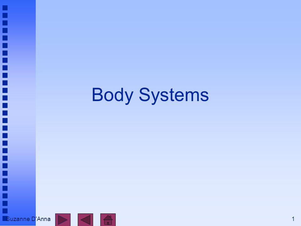 Suzanne D Anna2 Body Systems n integumentary n skeletal n muscular n nervous n endocrine n cardiovascular n lymphatic and immune n respiratory n digestive n urinary n reproductive