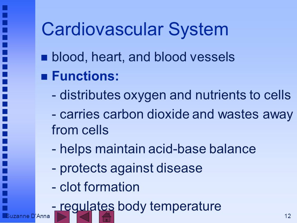 Suzanne D Anna12 Cardiovascular System n blood, heart, and blood vessels n Functions: - distributes oxygen and nutrients to cells - carries carbon dioxide and wastes away from cells - helps maintain acid-base balance - protects against disease - clot formation - regulates body temperature
