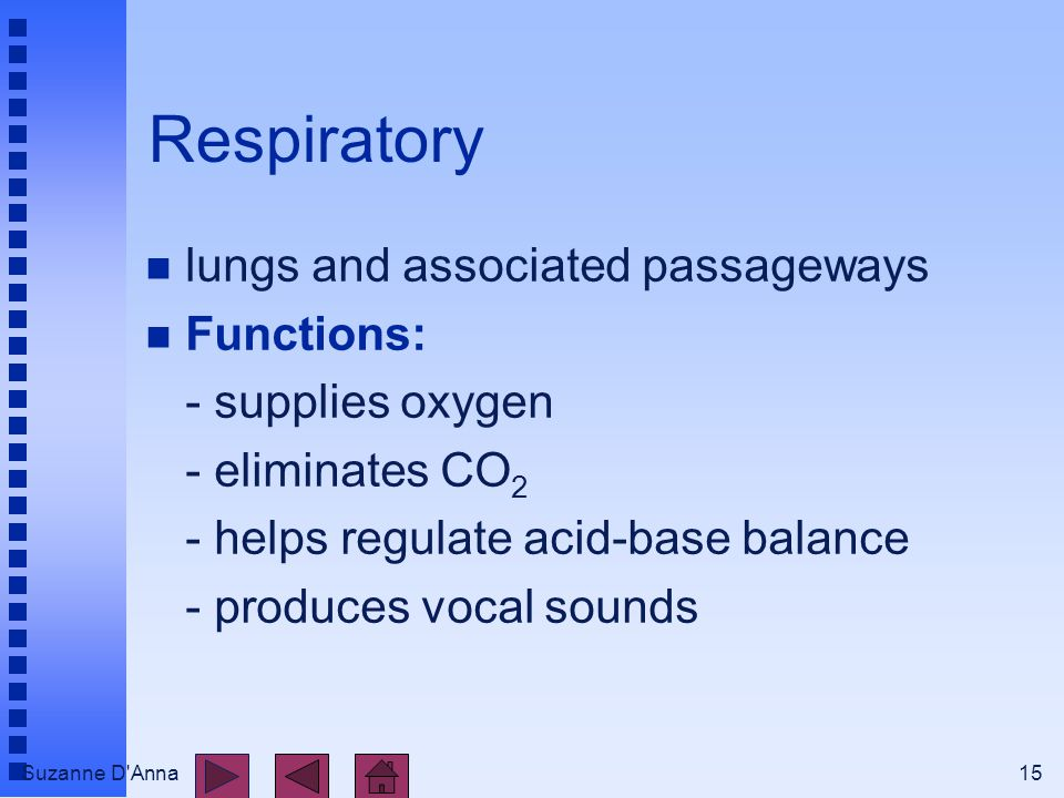 Suzanne D Anna15 Respiratory n lungs and associated passageways n Functions: - supplies oxygen - eliminates CO 2 - helps regulate acid-base balance - produces vocal sounds