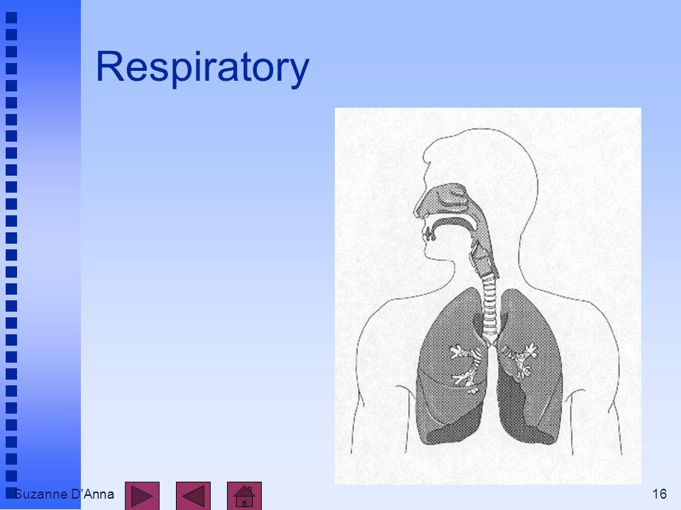 Suzanne D'Anna16 Respiratory