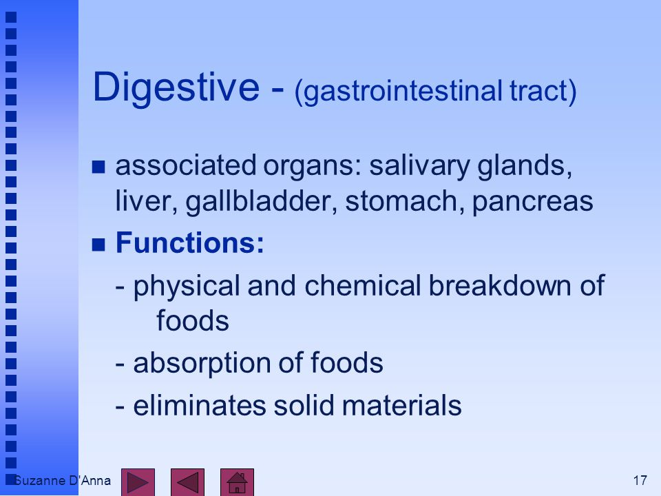 Suzanne D Anna17 Digestive - (gastrointestinal tract) n associated organs: salivary glands, liver, gallbladder, stomach, pancreas n Functions: - physical and chemical breakdown of foods - absorption of foods - eliminates solid materials