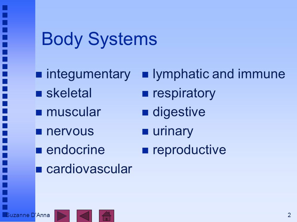 Suzanne D'Anna2 Body Systems n integumentary n skeletal n muscular n nervous n endocrine n cardiovascular n lymphatic and immune n respiratory n diges