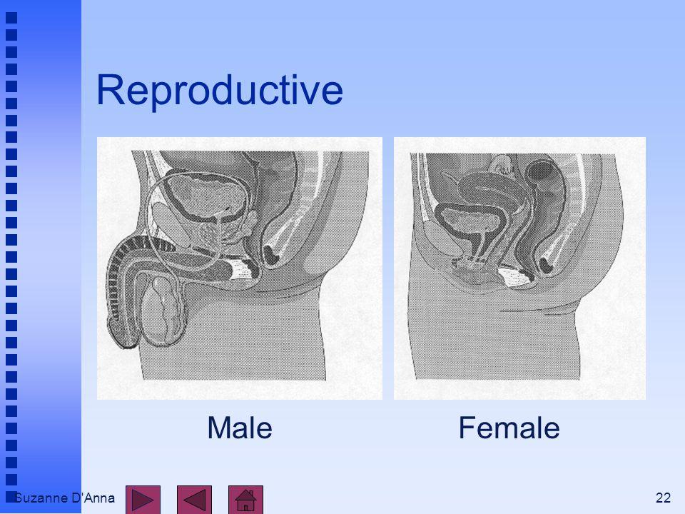 Suzanne D'Anna22 Reproductive MaleFemale