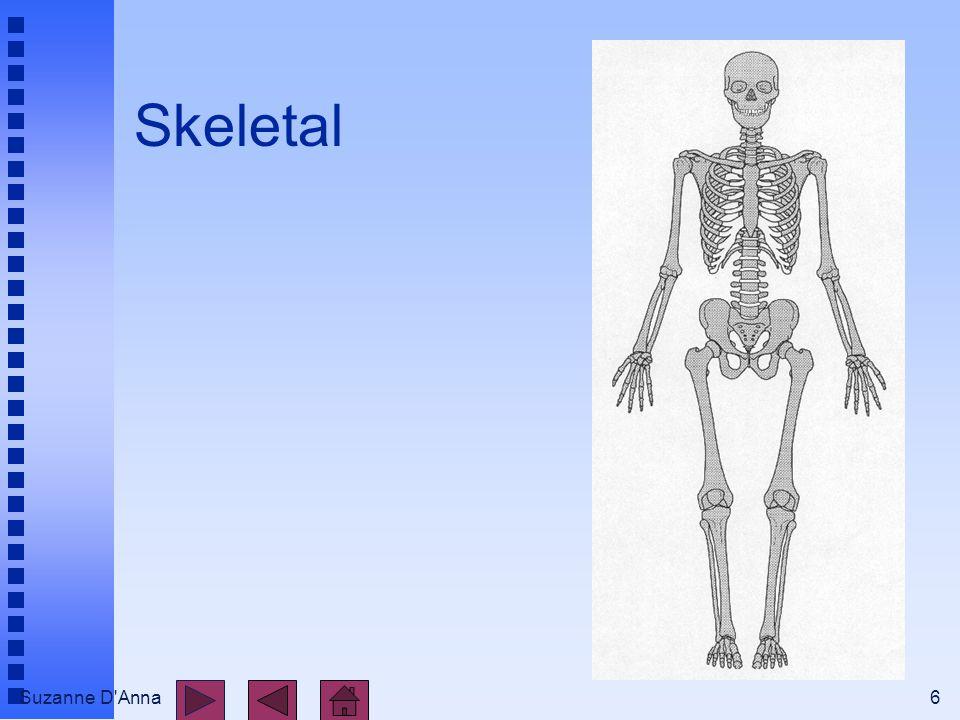 Suzanne D'Anna6 Skeletal