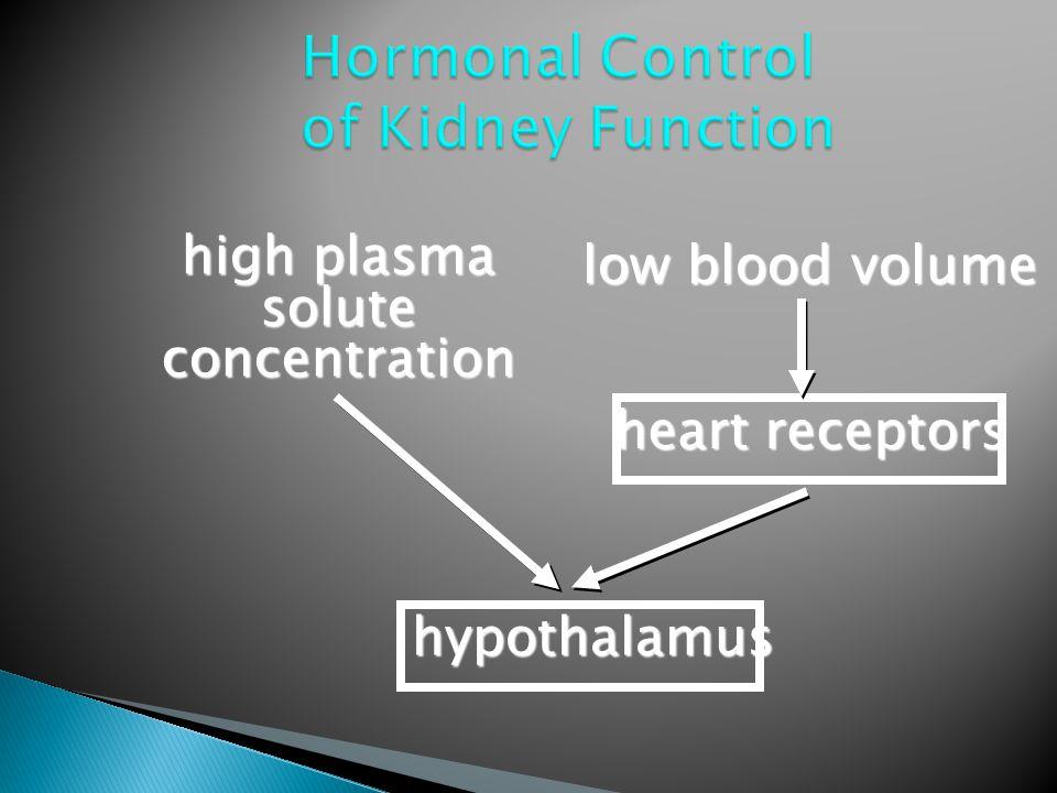 low blood volume high plasma solute concentration hypothalamus heart receptors